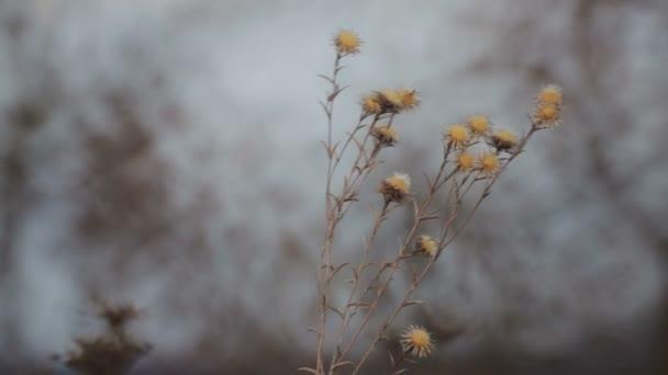 Semena divokých květin na louce v mrazivém. Ranní květy spadají.
