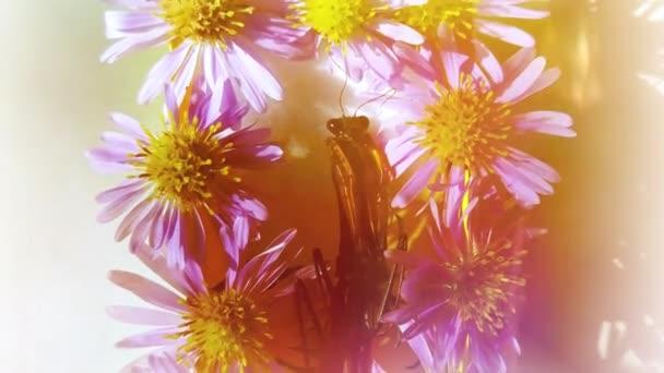detailní mrtvý kudlanka v rakvi s květinami na bílém pozadí. Surrealistické halloween pozadí