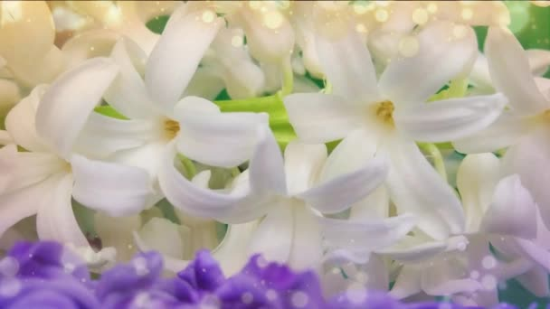 spring hyacinth flowers background, texture.