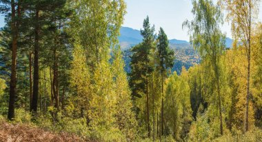 Sunny day in the mountains of Siberia. Autumn forest, wild place.