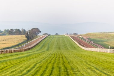 Horse Racing Track Grass