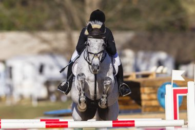 Horse Rider Show Jumping Action