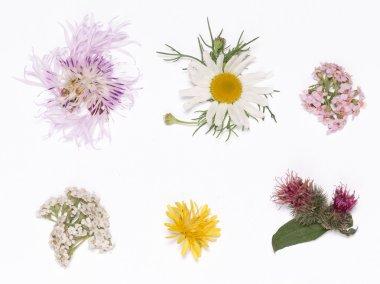 wild flowers on a white