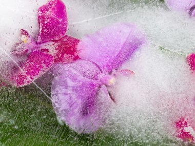Bright abstraction with orchids