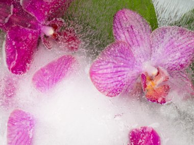 abstraction with bright orchids