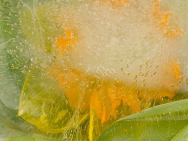 abstraction with a yellow flower