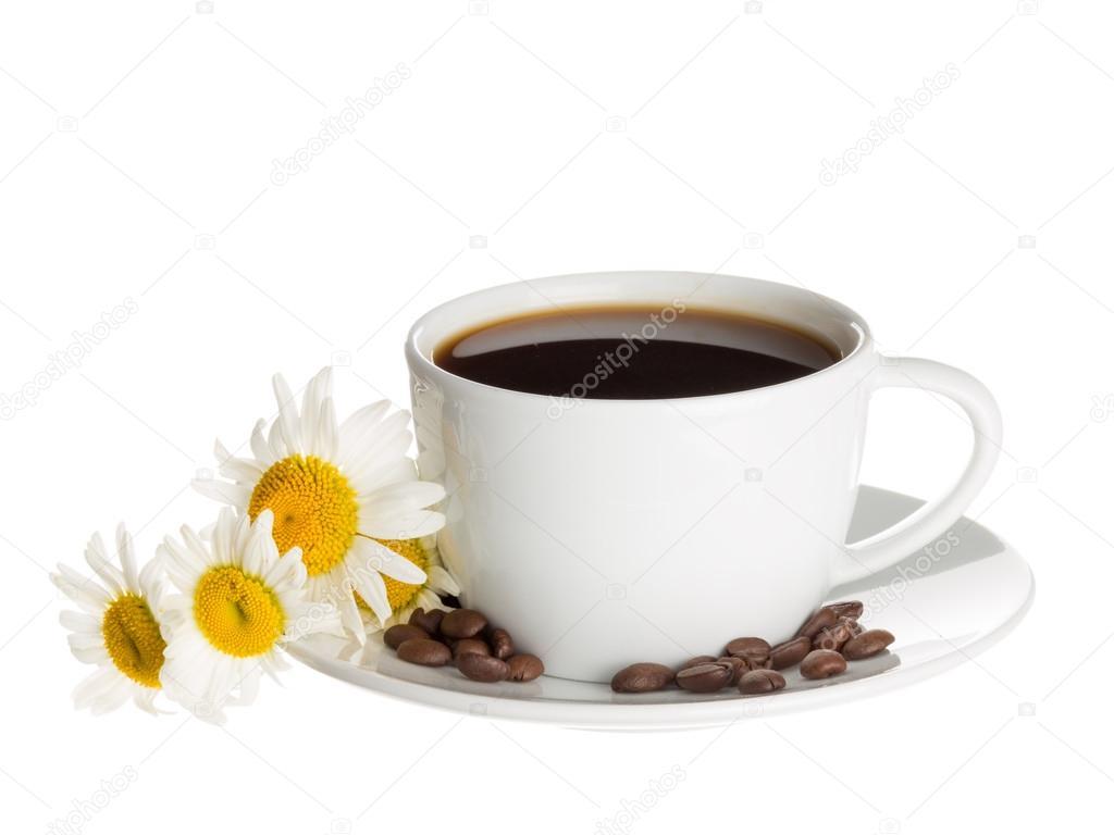Tasse Kaffee und Gänseblümchen — Stockfoto © andreevaee #77879454