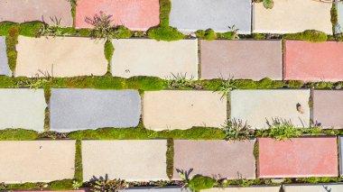 garden path and moss