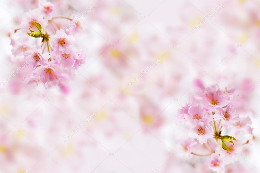 Immagini Fiore Astratto Rosa Sfondo Fiore Astratto Rosa Fiori Di