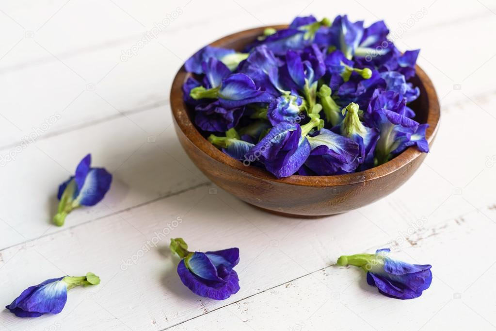 Butterfly pea or blue pea flower