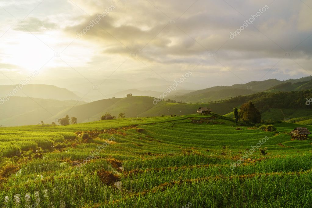 Green Terraces rice field in Pa Pong Pieng, Chiang Mai, Thailand