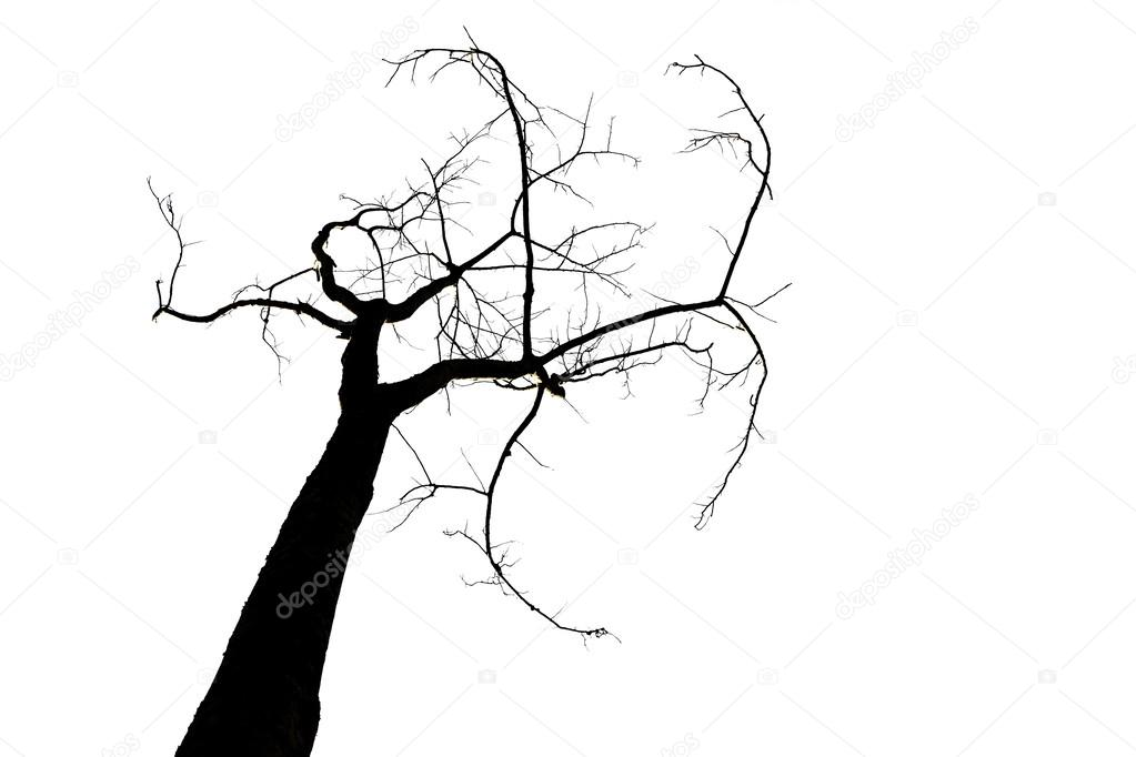 silhouette of tree isolated on white