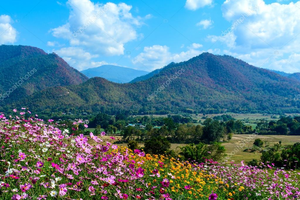 Flower fields with mountain and blue sky