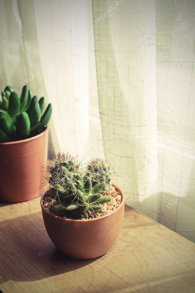 various of small plant and cactus in a pot