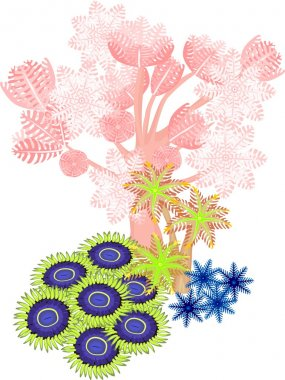 "Картина, постер, плакат, фотообои ""клавулярия, пиксения, зоантус - мягкие кораллы "", артикул 105912764"
