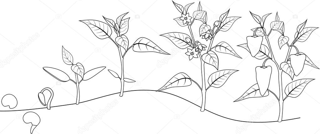 Coloring clipart plant, Coloring plant Transparent FREE for download on  WebStockReview 2020