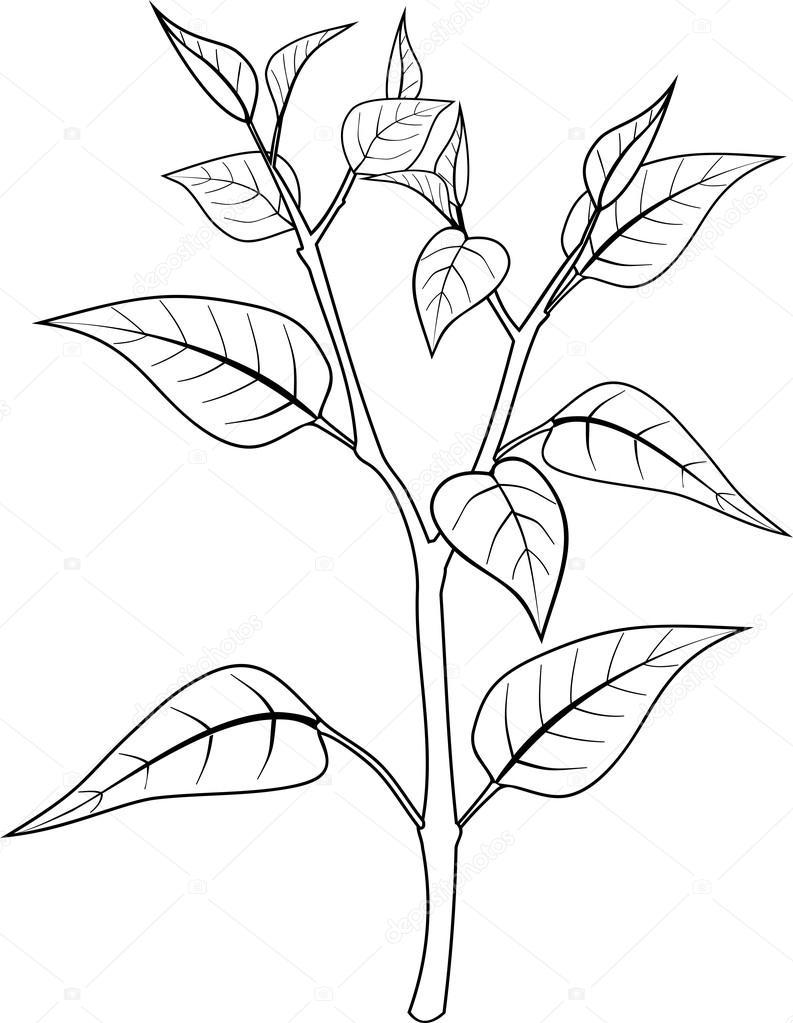 Imágenes: planta colorear | Página para colorear con planta