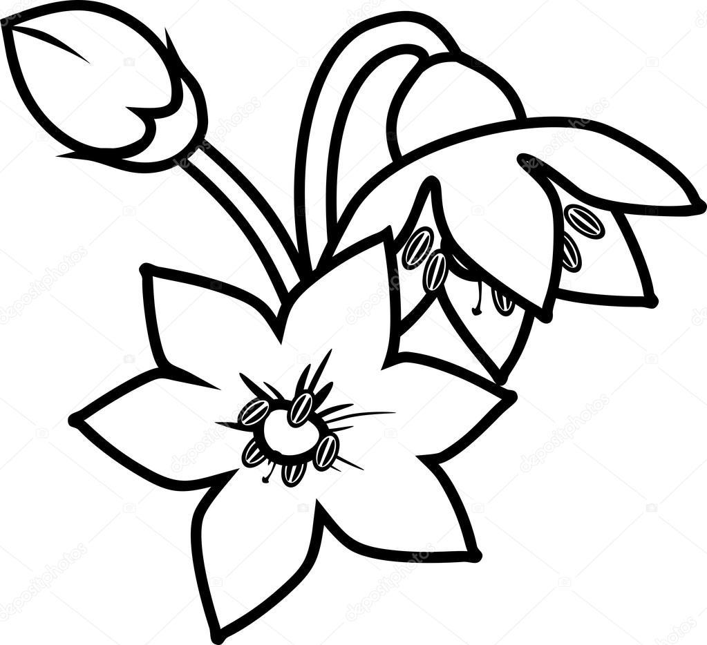 Página para colorear con flores de pimiento — Vector de stock ...