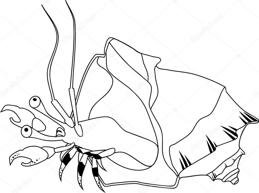 Malvorlagen mit Einsiedlerkrebs — Stockvektor © mariaflaya #120475660