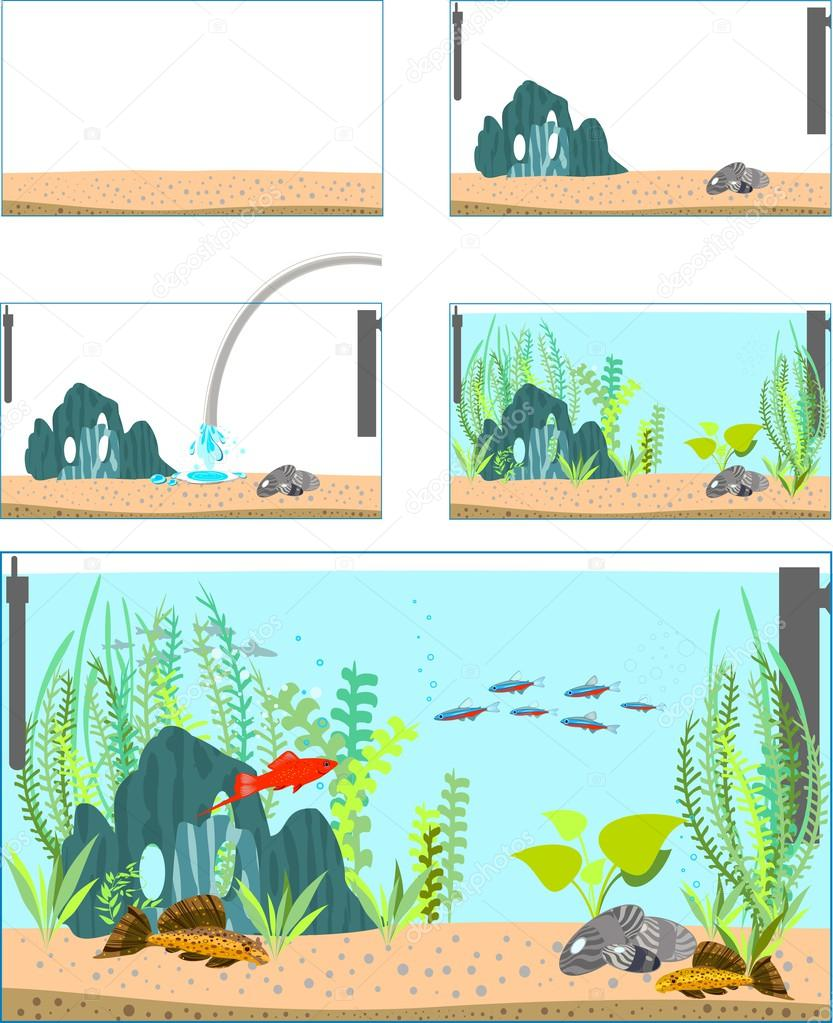 Stages of creating an aquarium