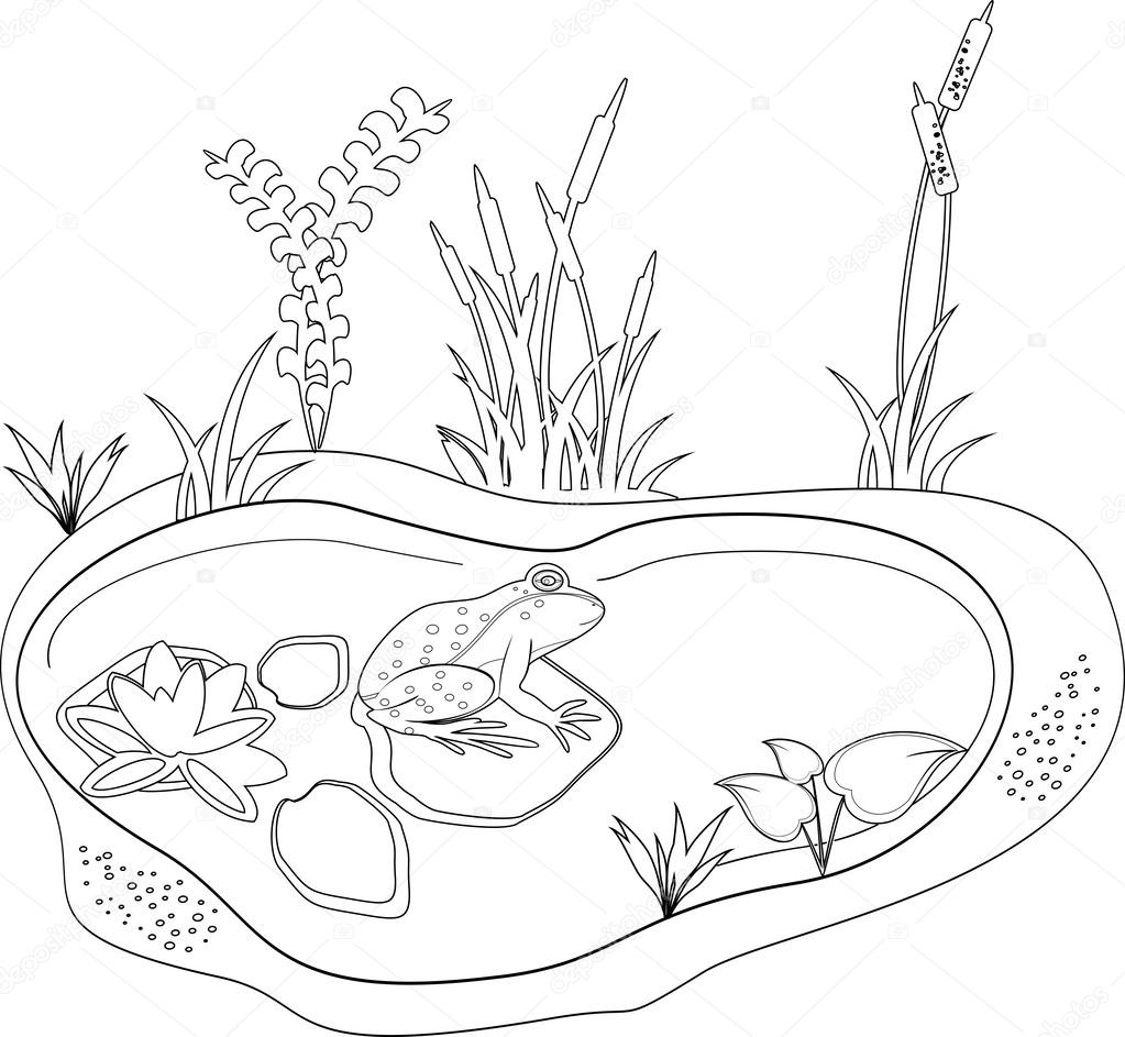 Coloring with a frog and pond