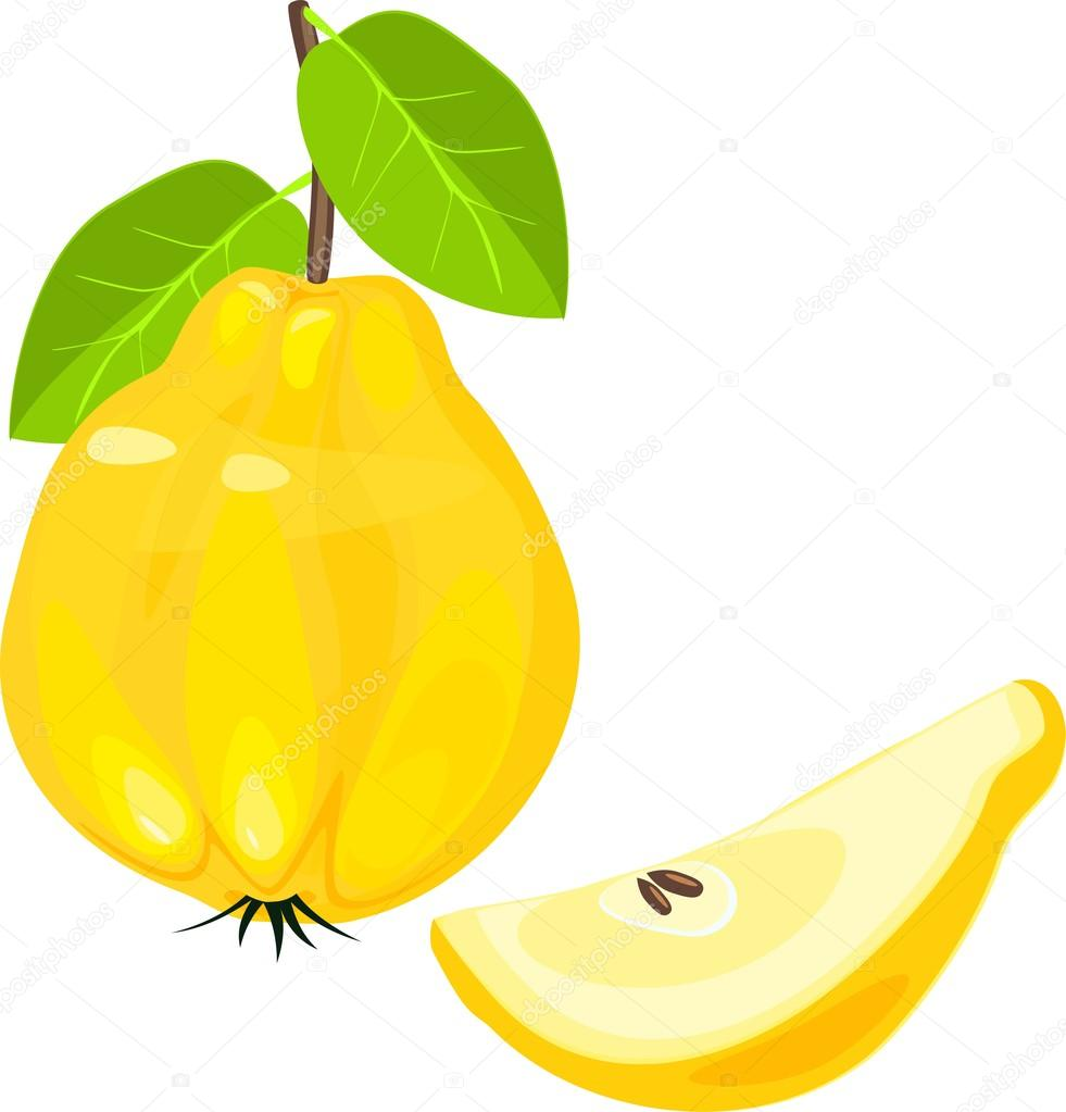 Yellow quince fruit