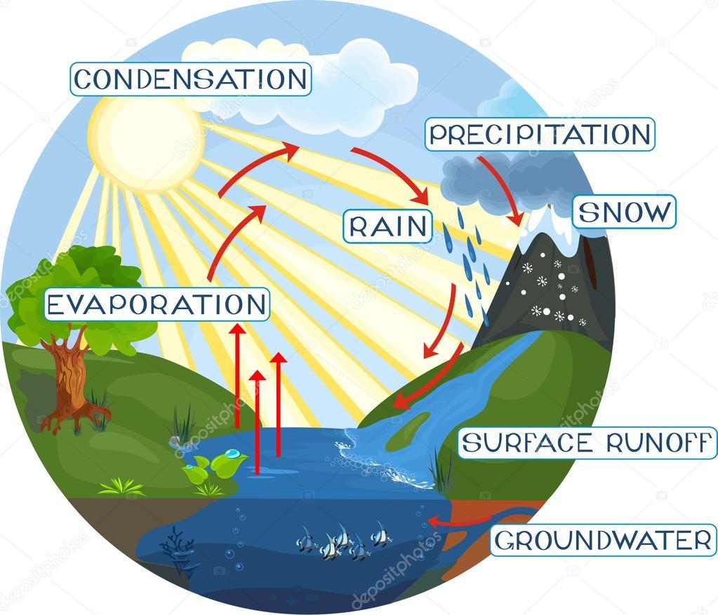 The Water Cycle Stock Vector AC Mariaflaya 88072508 Depositphotos Illustration
