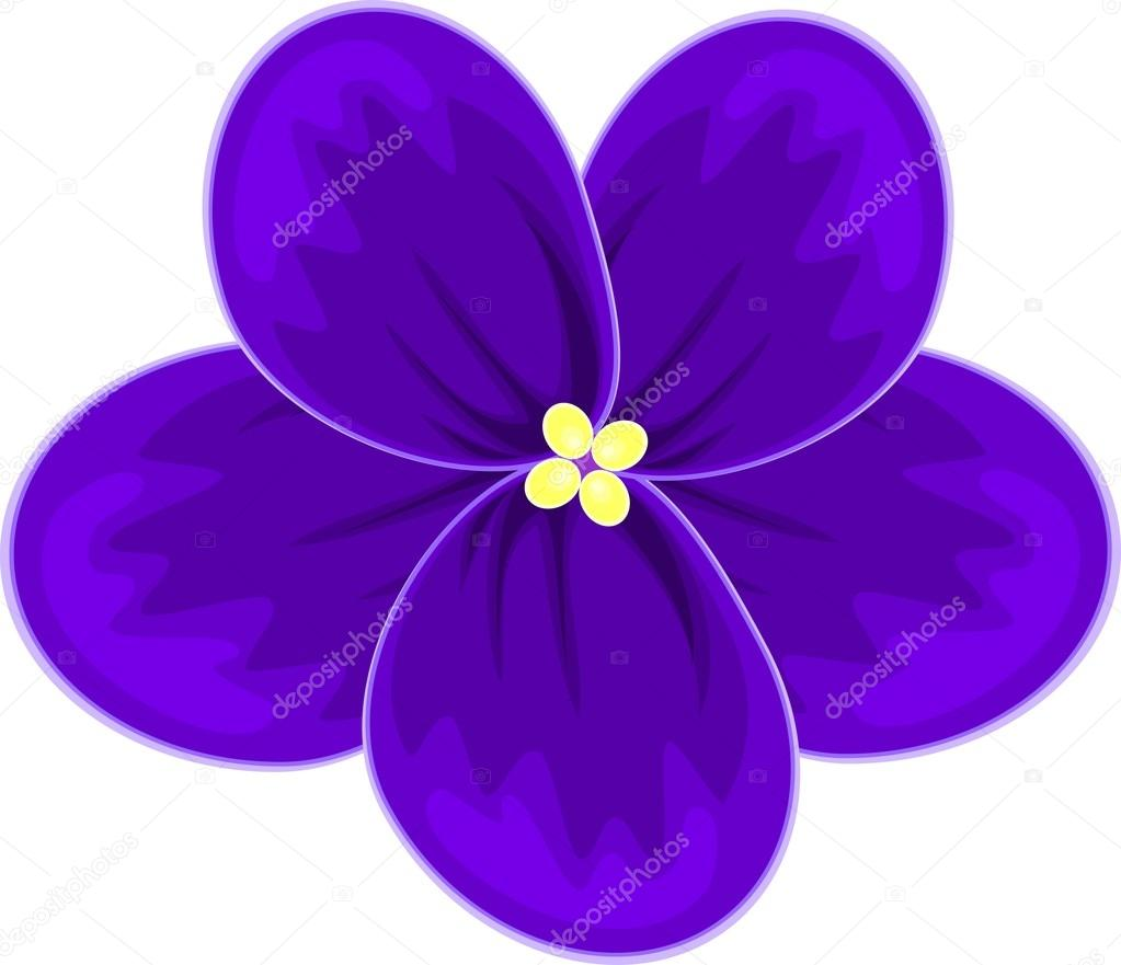 african violets (saintpaulia)