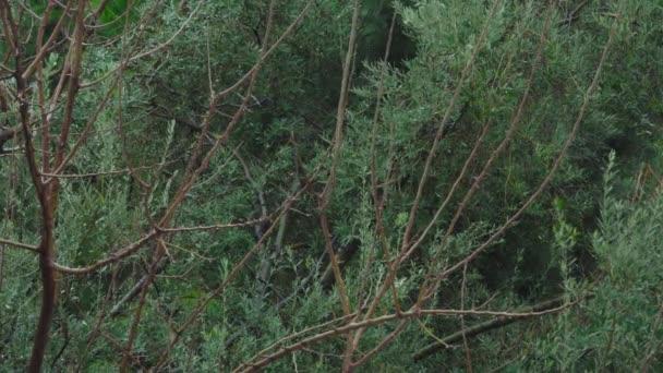 Pomalý pohyb kapky deště padající v zelených listech. Stock video s vodou kapky na pulzující zelené lesní stromy. Deštivý den. Deštný prales. Pomalu prší zblízka.