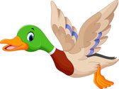 Fotografie Cartoon fliegende Ente