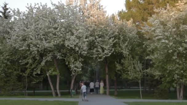 Park in Apfelbaumblüte