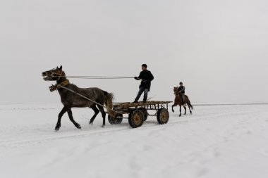 young men ride horses and carts on the snowy fields of Guroymak province in Mus,Turkey
