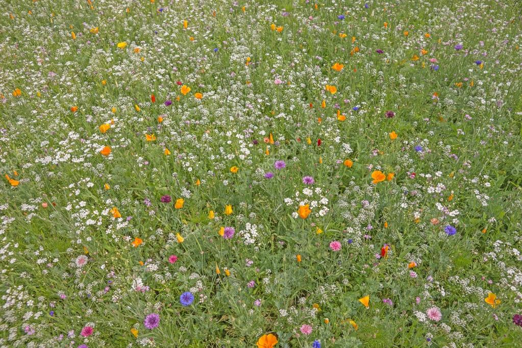 prato di fiori colorati in estate — Foto Stock © kelifamily #78527702