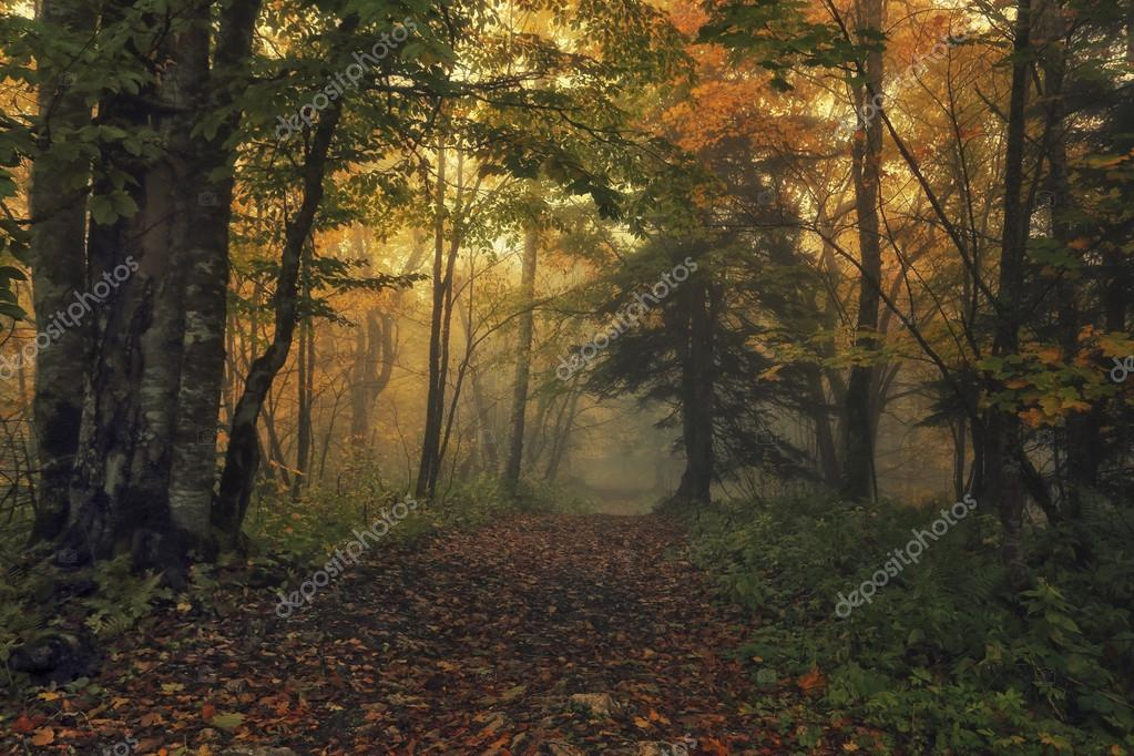 Path of Fall