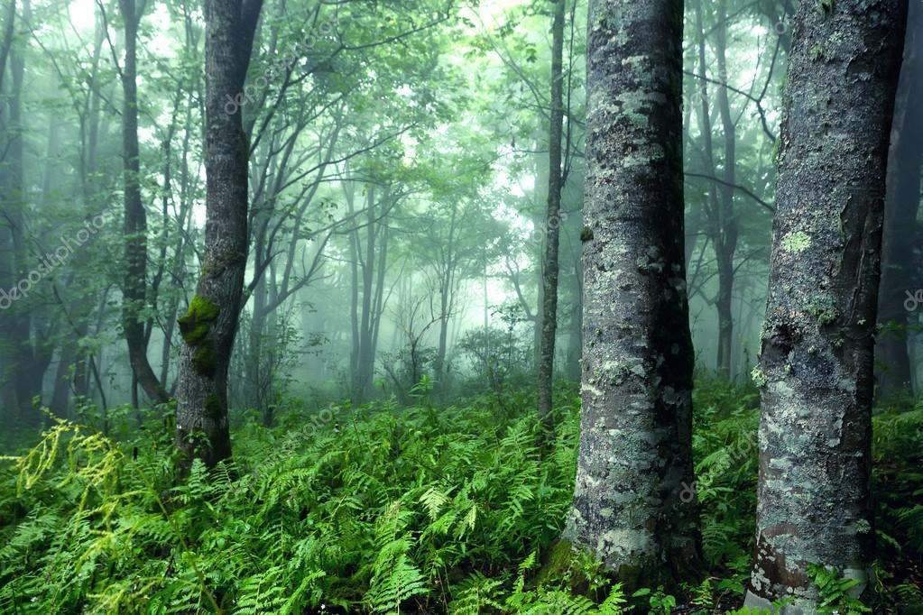 fantasy forest stock photo yakov oskanov 65402081