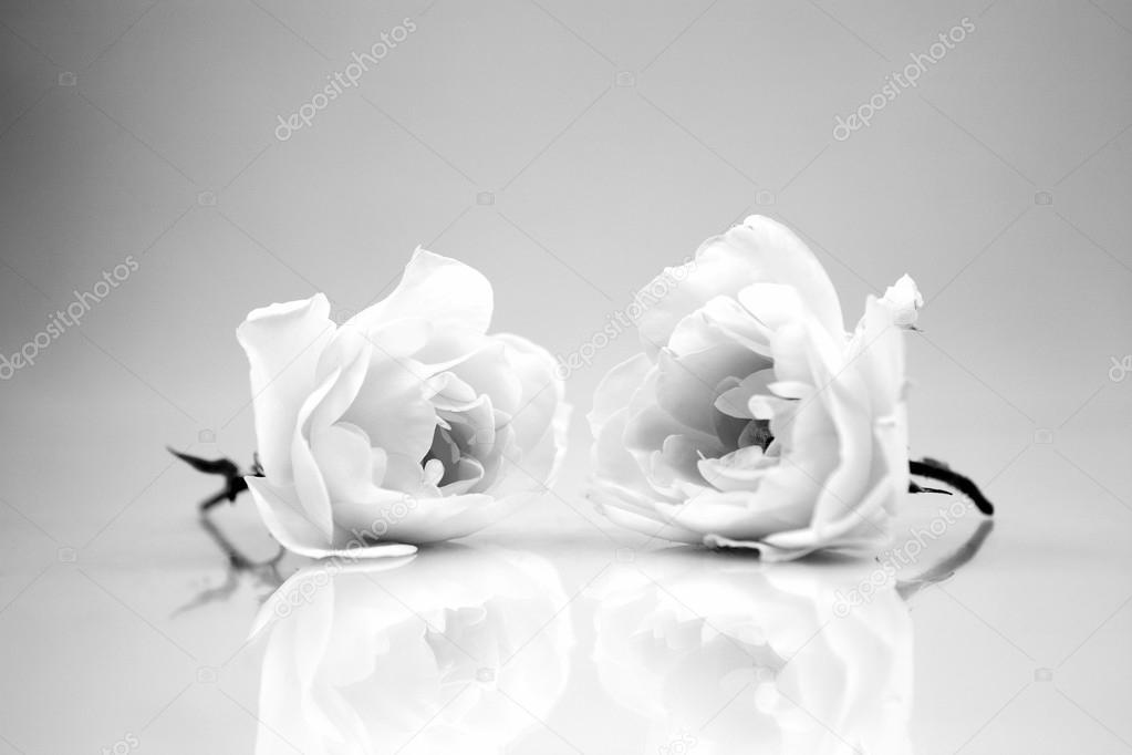 Fotos Bodegones De Flores Naturales Blanco Y Negro Composicion