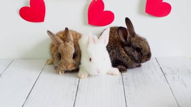 Három kis nyúl. állatok Valentin napra. Aranyos nyúl fehér háttérrel, piros szívvel. Mezőgazdaság, nyúltenyésztés
