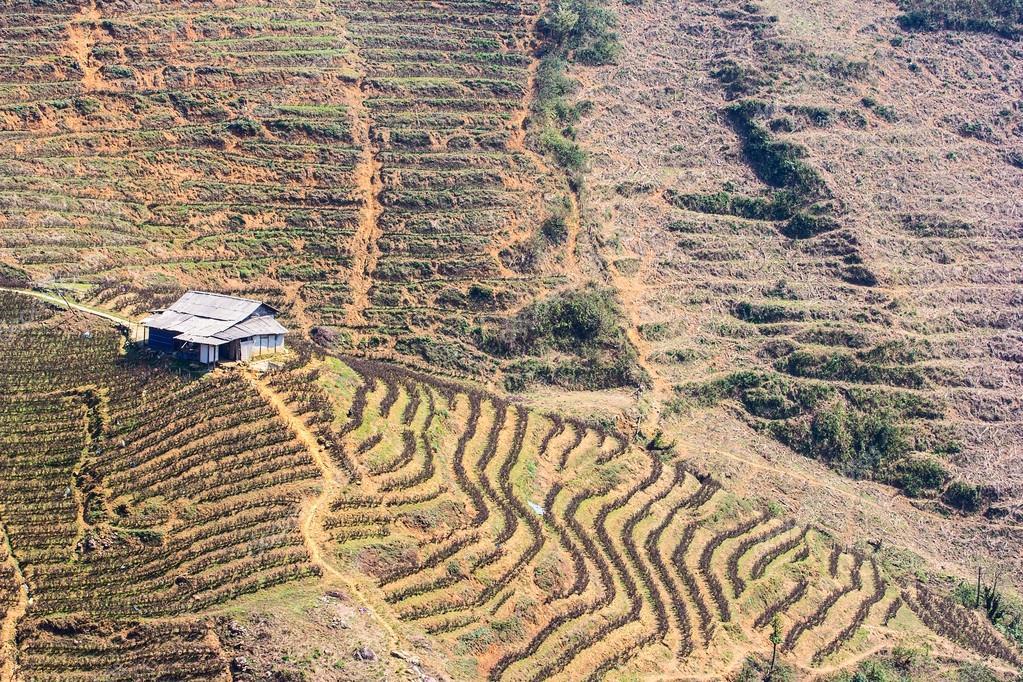 Campos De Arroz Terrazas De Cultivo Sapa Vietnam Fotos