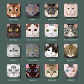 Fotografie Rassen von Katzen-Symbole