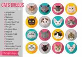Fotografie Reihe von populären Rassen von Katzen-Symbole