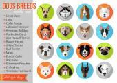 Fotografie Reihe von populären Rassen von Hunde-Symbole