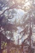 Sunbeam mattina nella foresta con fumo