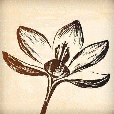 Hand drawn crocus flower
