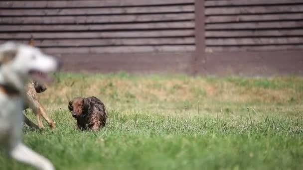Csoport-ból kutyák játszik a kertben, egy napsütéses nyári napon