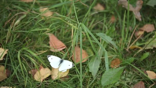 bílý motýl na zelené trávě