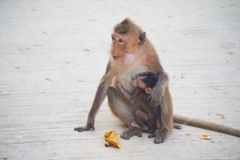 Wild monkeys in Thailand