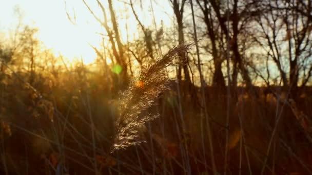 východ slunce přes rákosí, slunce přes rákosí, západ slunce na břehu řeky,