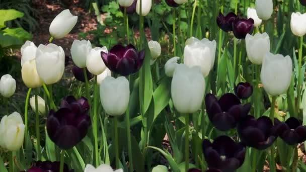 Květiny tulipány a příroda