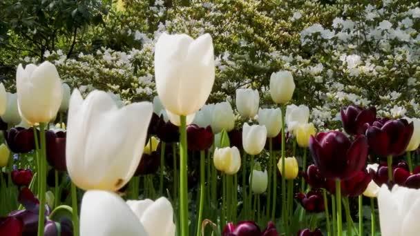 Tulipán virág és a természet-táj.