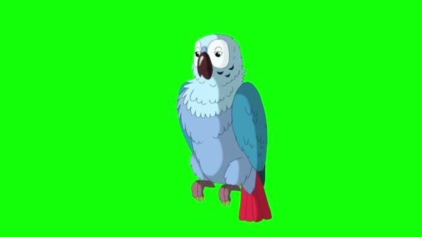 Modrý papoušek bude zlobit.